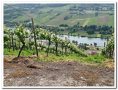 Moselle 2009_12